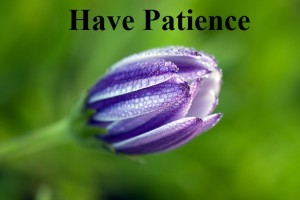 And because of Patience flower, God realization, Cultivating a relationship with God
