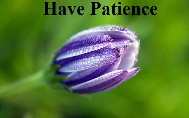 Patience flower, God realization, Cultivating a relationship with God